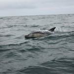 Vigo, Delfiner och Cascais (10)