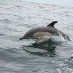 Vigo, Delfiner och Cascais (12)