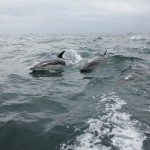 Vigo, Delfiner och Cascais (13)