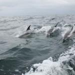 Vigo, Delfiner och Cascais (14)