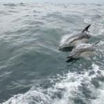 Vigo, Delfiner och Cascais (15)