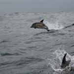 Vigo, Delfiner och Cascais (17)