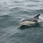 Vigo, Delfiner och Cascais (5)