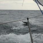 Vigo, Delfiner och Cascais (8)