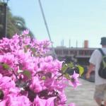 Gott om blommor i Playa de Mogan