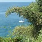 Tobago (109)