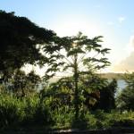 Tobago (15)