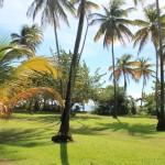 Tobago (59)