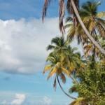 Tobago (61)